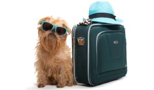 Holidays-with-Dogs-How-to-Travel-on-Vacation-with-Your-Dog