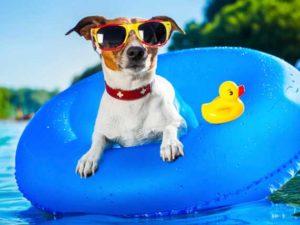 dog-in-pool
